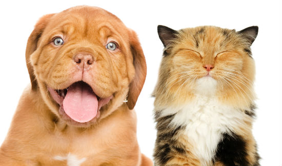 Smiling-pets-blog